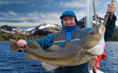 Verdiøkning for torsk i  juli måned