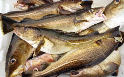 Sjømatbedriftene foreslår en mer fleksibel ferskfiskordning