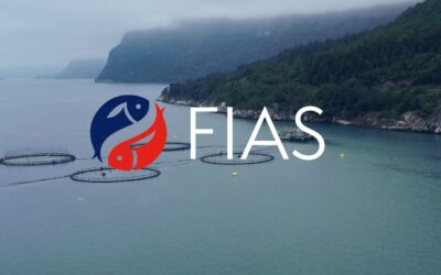 Ledig stilling som markedssjef i FIAS